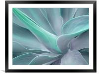 Agave Attenuata Abstract, Framed Mounted Print