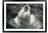 Polar Bear, Framed Mounted Print