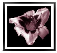 Brilliant Lily, Framed Mounted Print