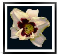 Glorious 2 Colour Lily, Framed Mounted Print