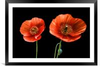 painted poppies, Framed Mounted Print