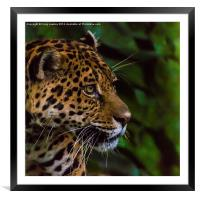Panther profile, Framed Mounted Print