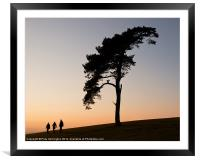 Lone tree on Raddon Top, Framed Mounted Print