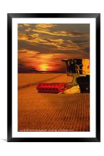 Harvest Summer Sunset, Framed Mounted Print