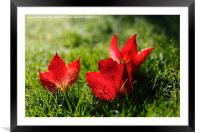 Beautiful Red Autumn / Fall Leaves, Framed Mounted Print