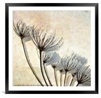 Frosty Hogweed., Framed Mounted Print