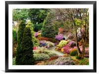 Heather at Compton Acres, Framed Mounted Print