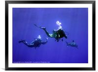 Divers Photographing an Oceanic Whitetip Shark, Re, Framed Mounted Print
