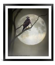 A HAWK IN THE MOONLIGHT, Framed Mounted Print