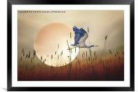 Flying Home, Framed Mounted Print
