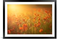Sunset Poppies, Framed Mounted Print