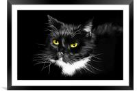 Domestic Black and White cat canvas print, Framed Mounted Print