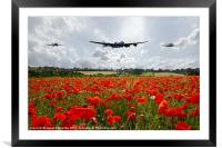 Poppy Fly Past, Framed Mounted Print