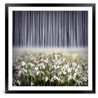 Pure, Framed Mounted Print