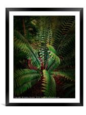 Tropical Leaves, Framed Mounted Print