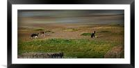 Collie Football, Framed Mounted Print