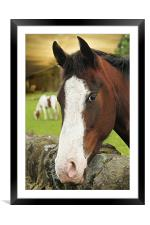 This is my best side. , Framed Mounted Print