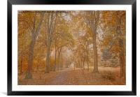 Autumn in the Woods, Framed Mounted Print