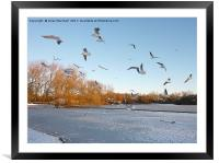 Winter in Stanley Park. Blackpool, Framed Mounted Print