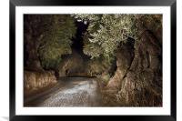 Olive Grove night Drive, Framed Mounted Print
