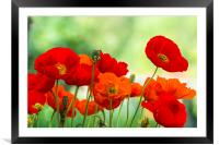 Poppy Display, Framed Mounted Print