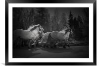 the Queen's horses, Framed Mounted Print
