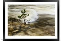 River Tree, Framed Mounted Print