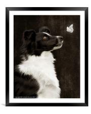 Border Collie with Butterfly, Framed Mounted Print