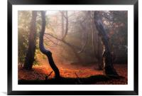 Autumn in Epping Forest, Framed Mounted Print