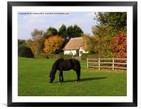 Autumn in the New Forest, Framed Mounted Print