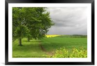 Rapeseed Oil Field Storm Yellow, Framed Mounted Print