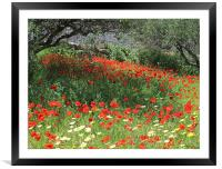 Poppies in Olive Grove, Framed Mounted Print