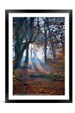 Chevin Forest Park #2, Framed Mounted Print