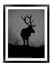 Monarch Of The Park, Framed Mounted Print