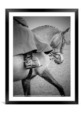 Show horse, Framed Mounted Print