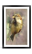 Sparrow 2, Framed Mounted Print