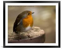 The Robin, Framed Mounted Print