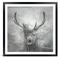 Stag Party, Framed Mounted Print