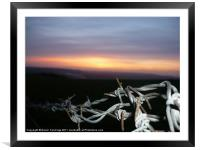 Barbwire Sunset, Framed Mounted Print