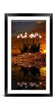 Sunset Snow Drops, Framed Mounted Print