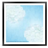 Cotton soft hydrangeas 2, Framed Mounted Print