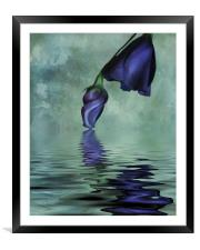Lisianthus blue, Framed Mounted Print