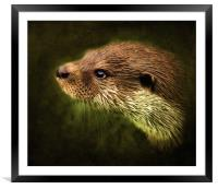 Otter, Lutra lutra., Framed Mounted Print