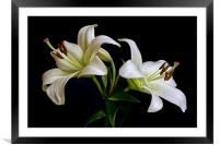White Lilies, Framed Mounted Print