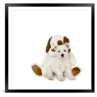 Westie Puppy and Teddy Bear, Framed Mounted Print