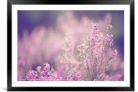 Dreamy Pink Heather, Framed Mounted Print