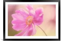 Anemone Wash - Natalie Kinnear Photography - Print, Framed Mounted Print