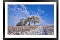 Trees in the snow Polarised, Framed Mounted Print