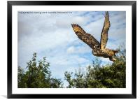Turkmanian Eagle Owl, Framed Mounted Print