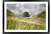 Sycamore Gap, Hadrians Wall, Framed Mounted Print